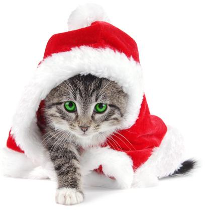 2011й год - год Металлического кота! :)
